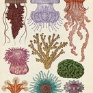 Katie Scott   Cnidaria illustration from Animalium   Cnidarians are incredibly…