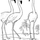 Animal Drawings Coloring Pages | Flamingo bird identification drawing and coloring pages