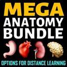 Anatomy MEGA Bundle (Google Drive Options) - 40% OFF