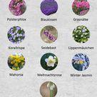Dies 10 Pflanzen blühen vom Herbst bis in den Winter