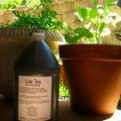 Homemade Plant Food