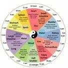 Traditional Chinese Organ Body Clock: Lana Moshkovich, DACM, L.AC: Chinese Medicine
