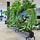 Gezonde kantoor werkplek afscheiding dankzij verplaatsbare roomdivider met levend groen | GRØNN