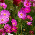 Daftar Nama Bunga Lengkap Beserta Gambar dan Penjelasannya - BibitBunga.com