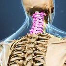 Cervical Spine Anatomy Video