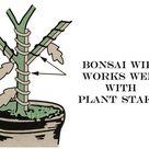 Bonsai Wire ~ 3 mm Diameter - 25' Length