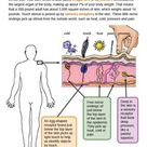 Grade 4 - Human Body - Structure and Function and Information Processing - Downloadable Only