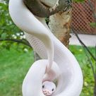 29 Breathtakingly Beautiful Albino Animals