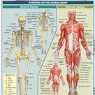 QuickStudy   Anatomy Fundamentals Life  Science Laminated Study Guide