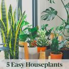 5 Easy Houseplants Perfect For Beginners