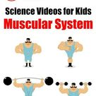 YouTube Science Videos Teaching Kids Human Body Muscular System