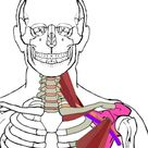 Pain Along the Biceps, Maybe Collar Bone & Forearm - Integrative Works