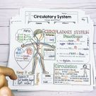 Circulatory System, heart, and blood informational text and activities