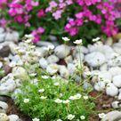 Pflanzen für Steingarten7 pflegeleichte Vorschläge   Garten, Gartenarbeit   ZENIDEEN