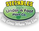 Plants that tolerate foot traffic