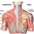 The Cause of Shoulder Pain: Why it's a Consequence of Something Else | Your Wellness Nerd
