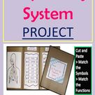 Project on Respiratory System of Human Body Cut & Paste Match Symbol & Function File Folder Activity