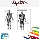 Muscular System Diagrams and Quiz (Distance Learning)