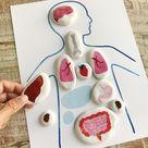 Montessori Internal Organs Matching Game DOWNLOADABLE PDF