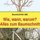 Das ABC des Baumschnitts