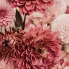 The latest iPhone11, iPhone11 Pro, iPhone 11 Pro Max mobile phone HD wallpapers free download, dahlias, flowers, bouquet, pink - Free Wallpaper   Download Free Wallpapers