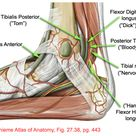 Ankle Pain:  Tarsal Tunnel Syndrome