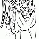 Printable Animal tiger of africa coloring pages - Free Kids Coloring Pages Printable