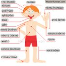 Body Parts - Russian Vocabulary for Human Body