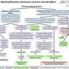 Potassium Sparing Diuretics Mechanism of Action and Side Effects   Calgary Guide