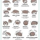 Hedgehog Body Language
