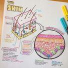 Sarah Clifford Illustrations   Wiki   Science Amino