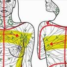 16 Danger Signs That Your Lymphatic System Is Sluggish And How To Do A 3-Day Lymph Detox