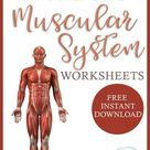 FREE Worksheets for the Muscular System - Homeschool Giveaways