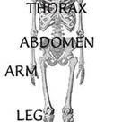 Instant Anatomy - Learn human anatomy online
