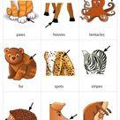 Animal Body Parts 3 flashcard
