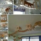 Cat Play Rooms