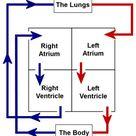 Anatomy & Physiology - TeachPE.com