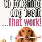 Hate Dog Teeth Brushing? (Me Too) Simple DIY Dog Teeth Care Tips & Alternatives That REALLY Work!