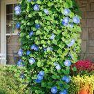 Plants For Hanging Baskets
