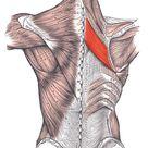 Mit diesen Übungen Verspannungen zwischen den Schulterblättern lösen