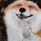 The happiest fox.