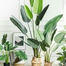 Bathroom plants that absorb moisture   Missmv.com