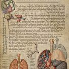 Human Lungs Anatomy, Function