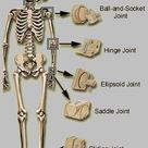 Muscles Anatomy & Physiology Health Fitness Training