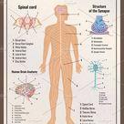 Nervous system retro poster
