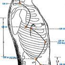 (GB) Gall Bladder Meridian - Graphic