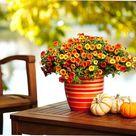 40 Gorgeous Fall Container Garden & Planter Ideas