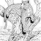 Leopard 27 coloring page   Free Printable Coloring Pages