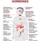 Endocrine gland and hormones. Human endocrine system. anatomy. Human...