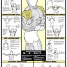 Shoulder Workout Professional Fitness Instructional Wall Chart Poster   Fitnus Corp.